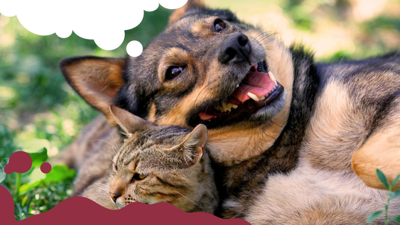 Cão e gato sonhando com Cafuné
