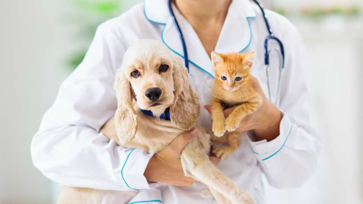 Veterinaria, gato y perro